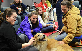 Furry friends ease stress of studies
